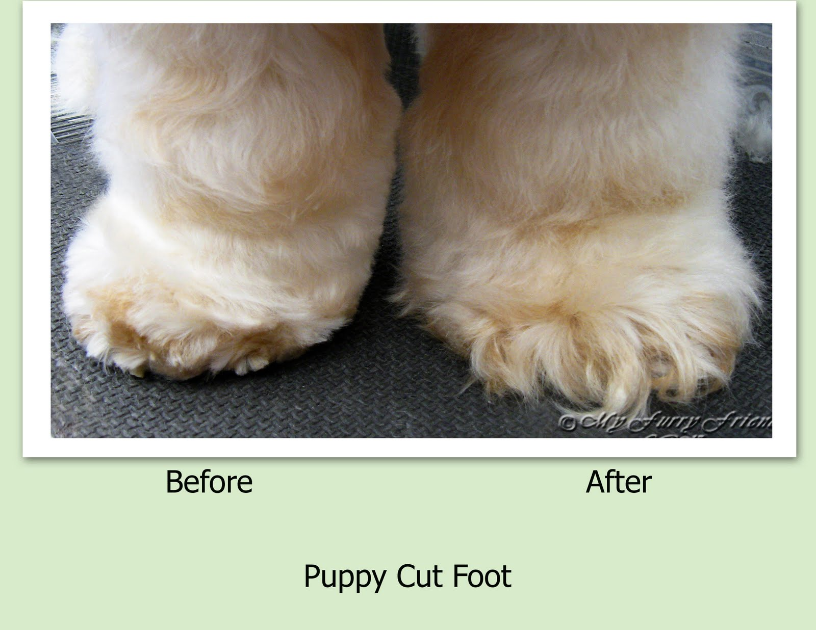 Cat Like Feet Trim On Dog