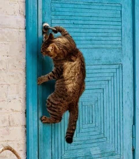 voglio entrare!