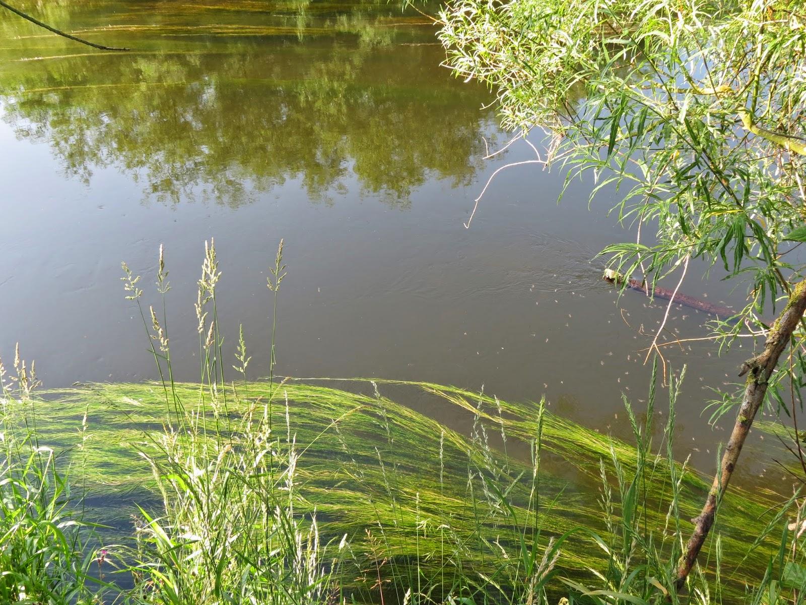 river derwent barbel swims