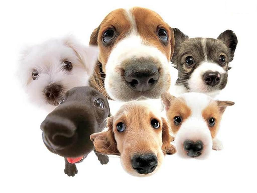 http://3.bp.blogspot.com/-5UEgkh5tX30/UhvpgcQ8QEI/AAAAAAAAJPY/YK9FvFVlbf8/s1600/dogday.jpg