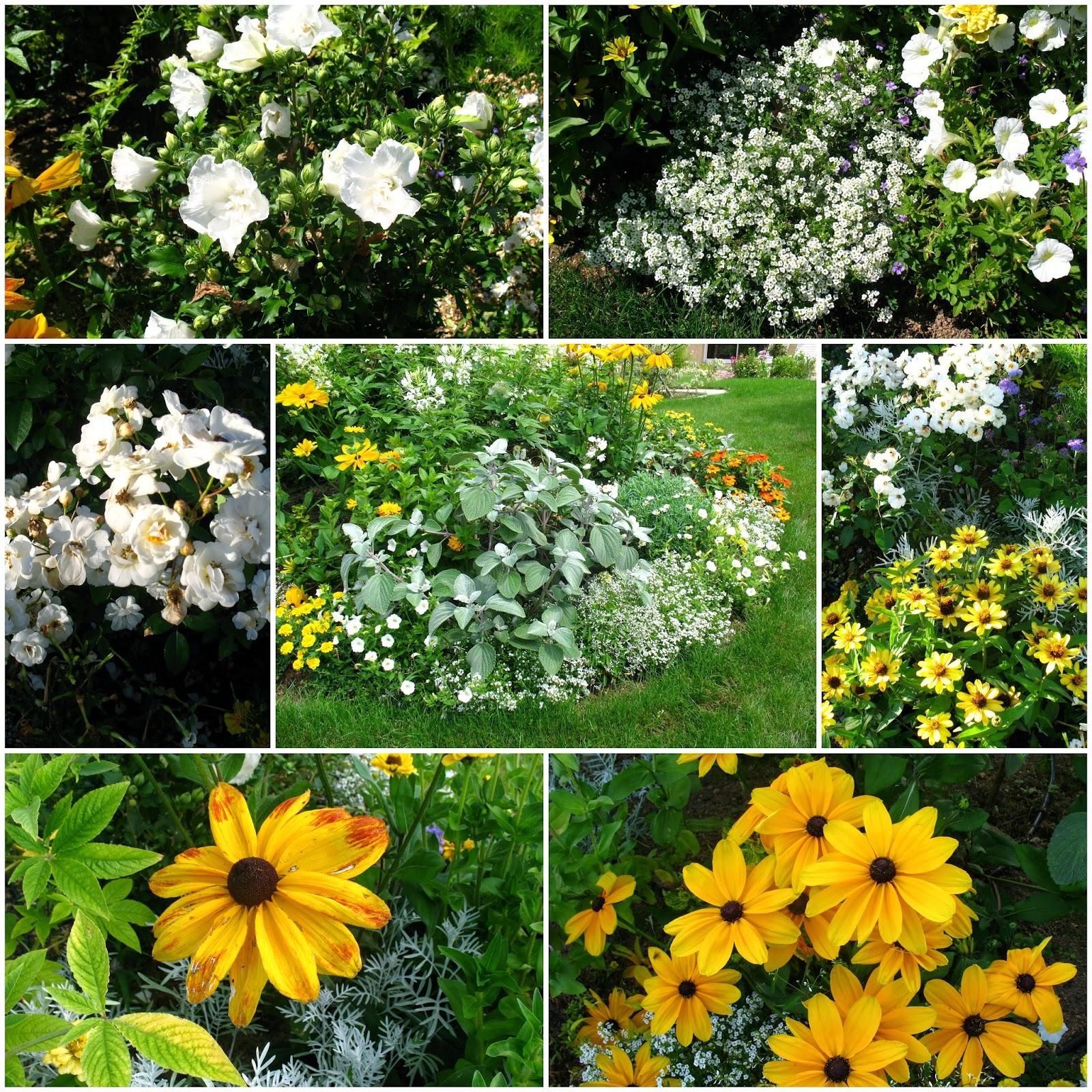 Roses du jardin ch neland - Laisser libre cours a son imagination ...