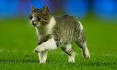 Liverpool Cat