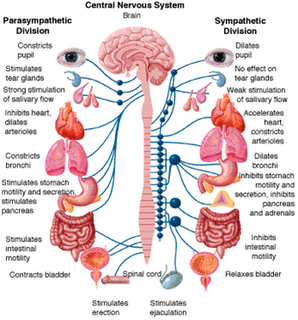 Obat Hipofisis