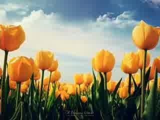 Bunga Indah Lorerm Ipsum Sit Amit