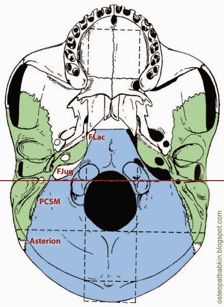 рваное отверстие, яремное отверстие, PCSM - мыщелко-чешуйчато-сосцевидный пивот, Asterion