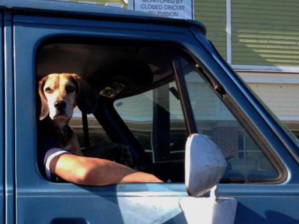 cachorro fazendo entrega