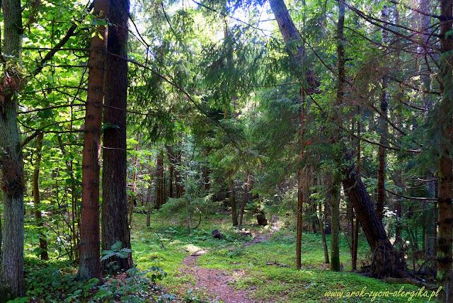 Rezerwat przyrody Widowo