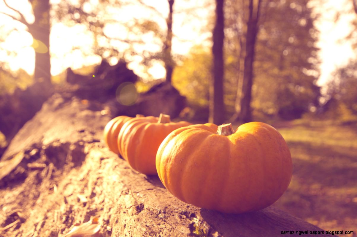 Tumblr Halloween activities and Autumn on Pinterest