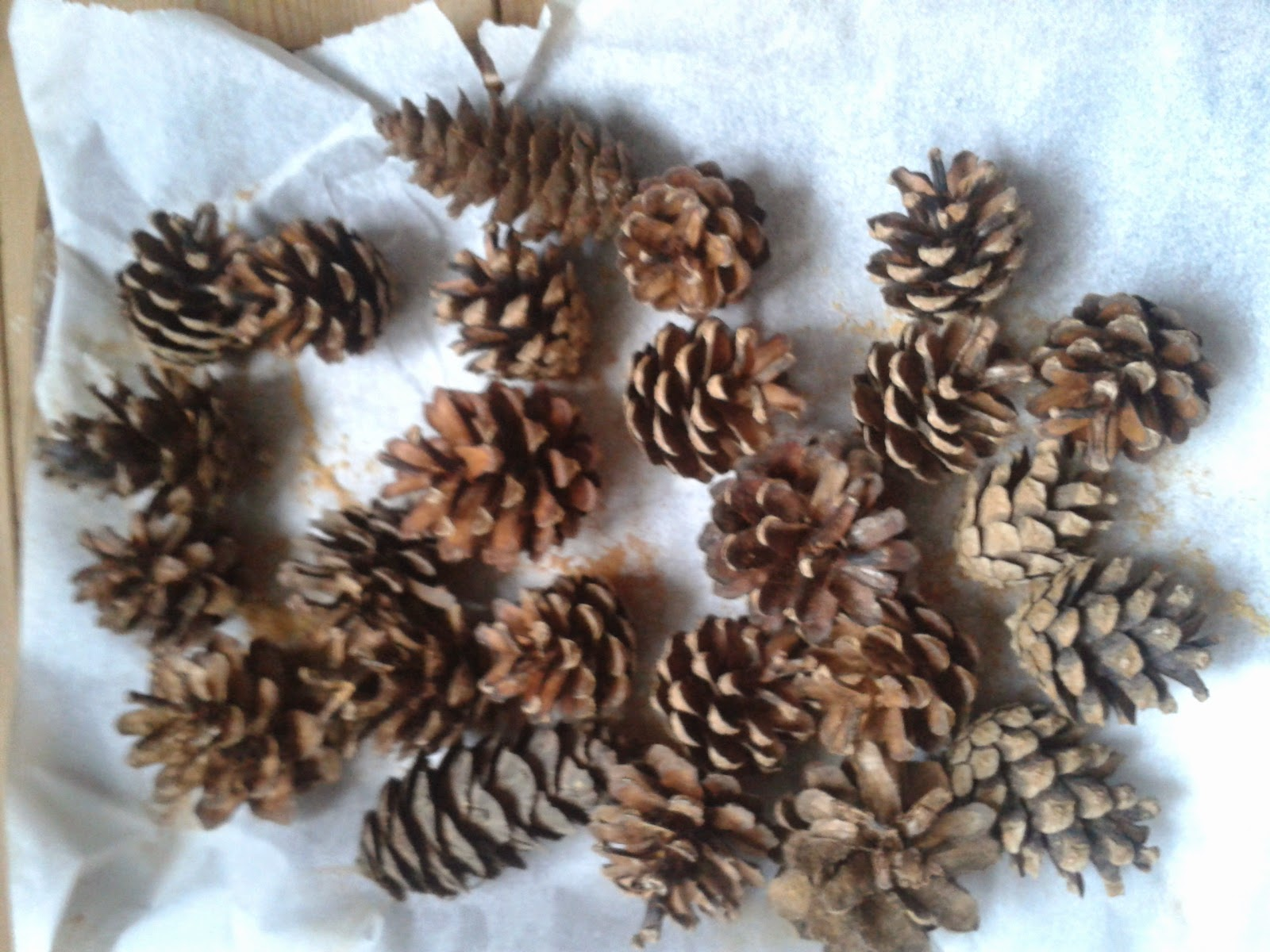 using pinecones for Christmas decorations