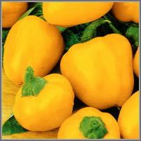 Сладкий перец сорт «Сливки жёлтые»