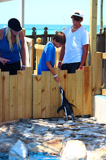 New animal encounters at Gulfarium Marine Adventure Park