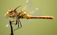 Insects HD 20