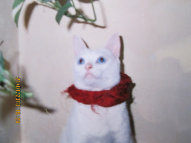 """Trixie"" had the most beautiful ""BLUE EYES"", typical of a ""Simese Albino"" cat."