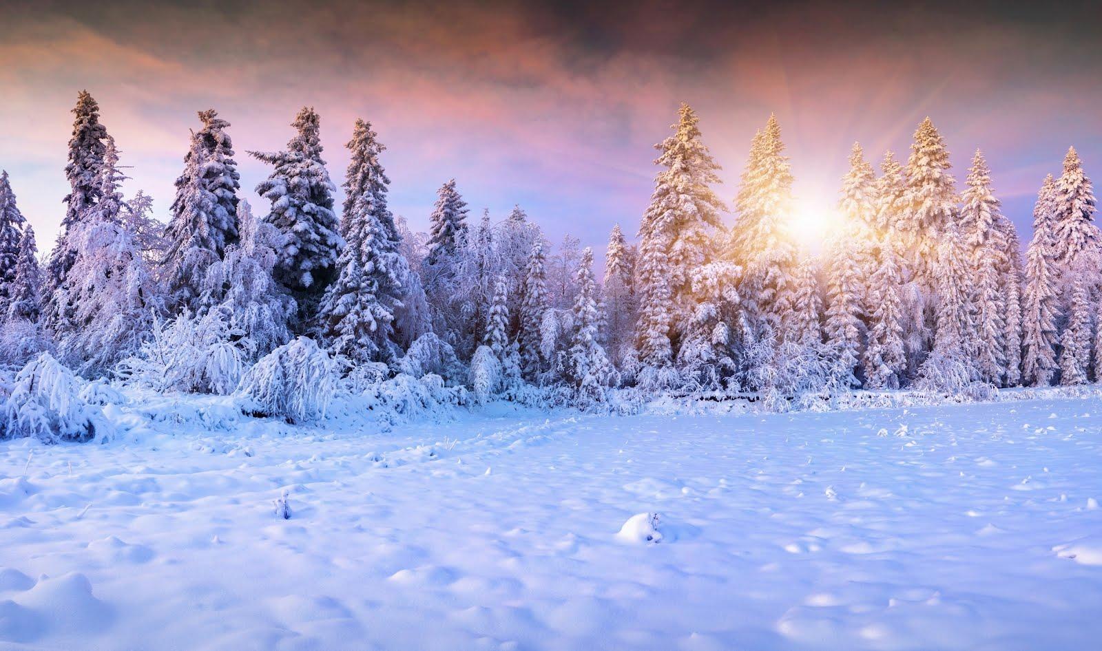 13 sv. vánočních nocí - meditací