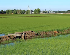 Water use in Rice, separating fact from hyperbole