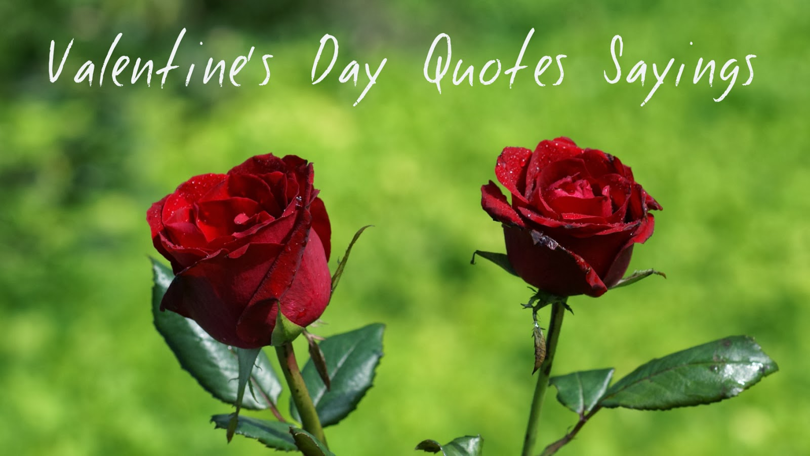 Happy valentines day quotes for him quotesgram for Quotes on valentine day