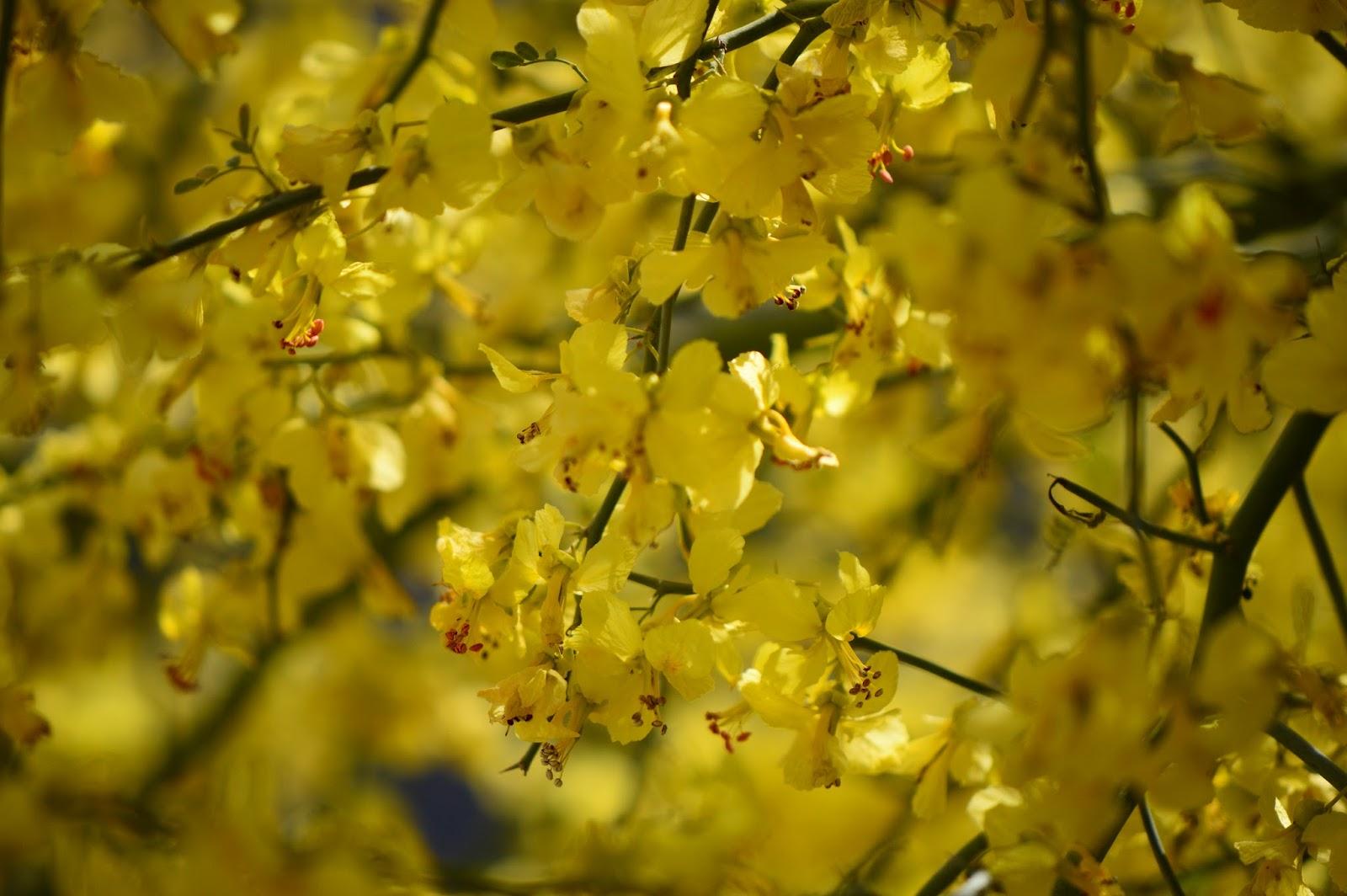 A Small Sunny Garden The Wild Tree April