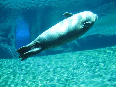 focas-oceanografic-valencia