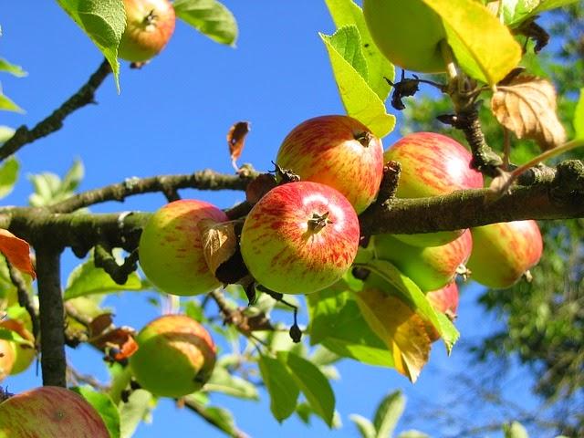 Berikut Beberapa Manfaat Cuka Apel Untuk Tubuh Anda