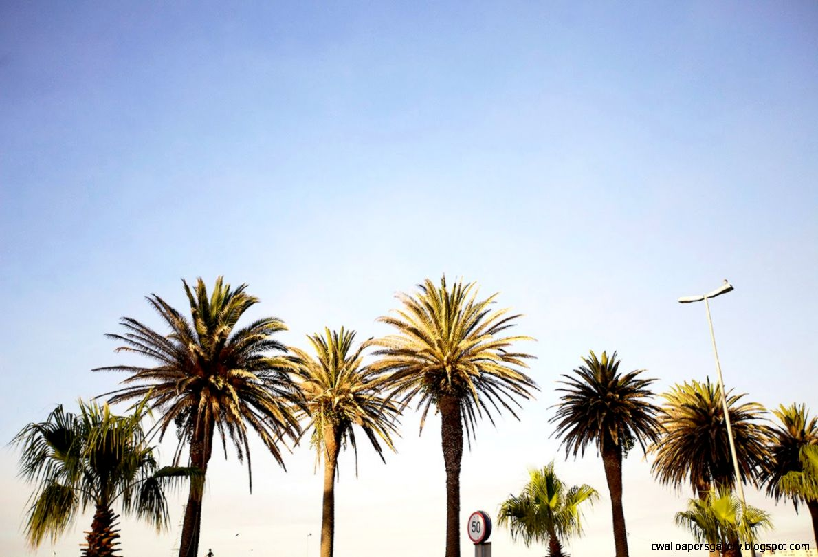 California Tumblr Photography Palm Trees   wallpaper