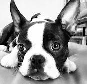 Me, Olive Dog