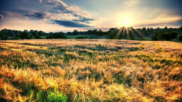 Nature landscape fields sun rays HD Wallpaper