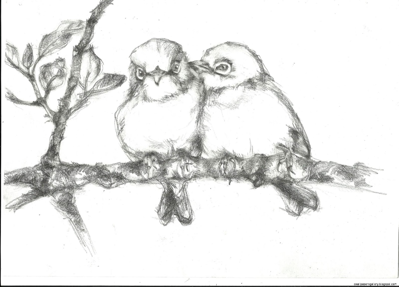Birds On Branches Drawings