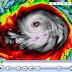 China: el tifón Usagi deja al menos 25 muertos