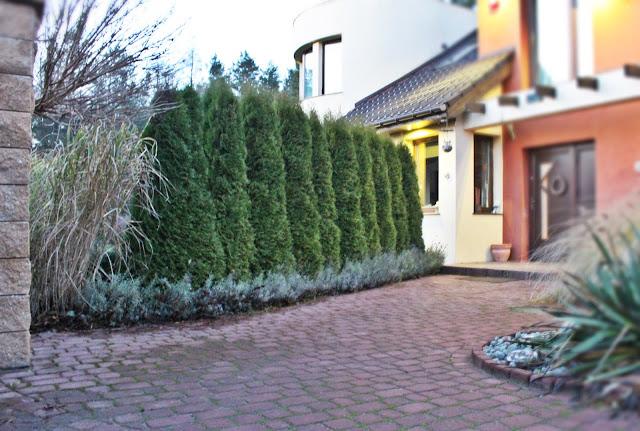 piękny nowoczesny dom,design, interiors, wnętrza, blogerka szczecin,lawenda w ogrodzie,prace ogrodowe kiedy zbierać liście, jak zbierac liście do kompostu,czym grabimy liście