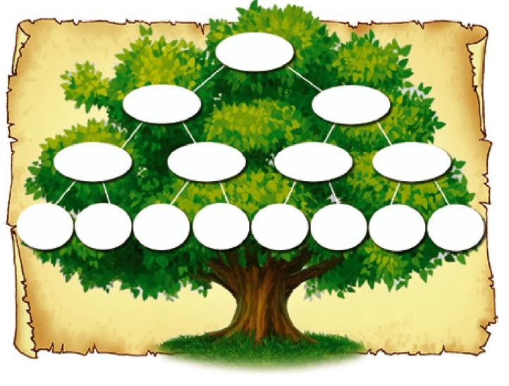 Генеалогическое дерево своими руками для школы