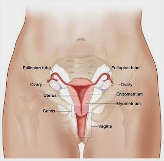 Mengenali Kanker Mulut Rahim
