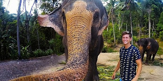 foto+selfie+gajah