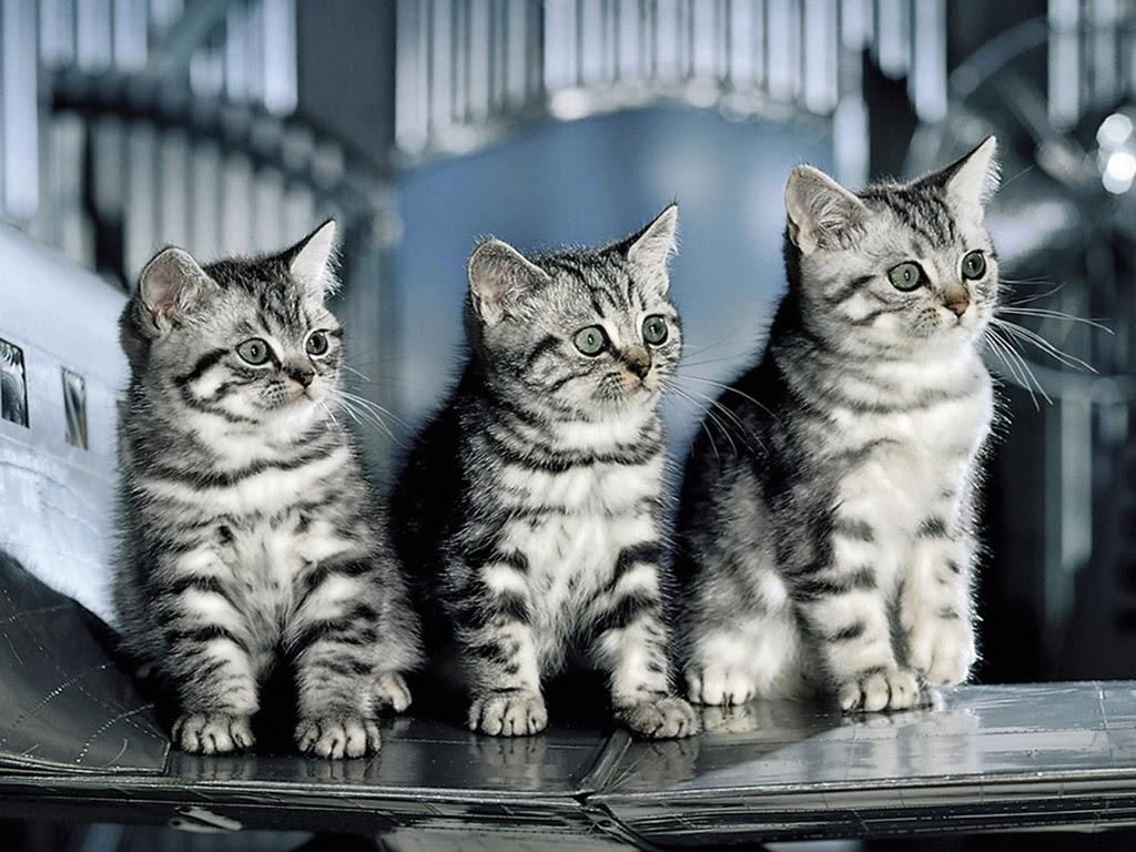 قطط مع خلفية مذهلة