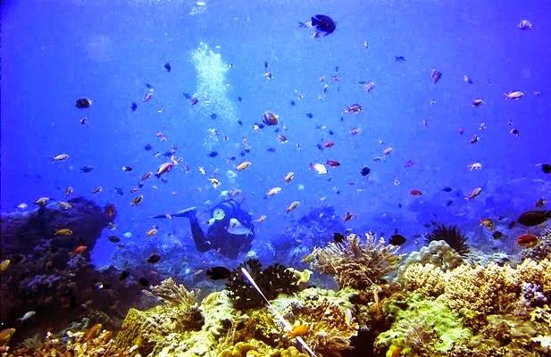keindahan bawah laut Bangsring Underwater, Banyuwangi.