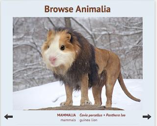 http://animaldiversity.org/