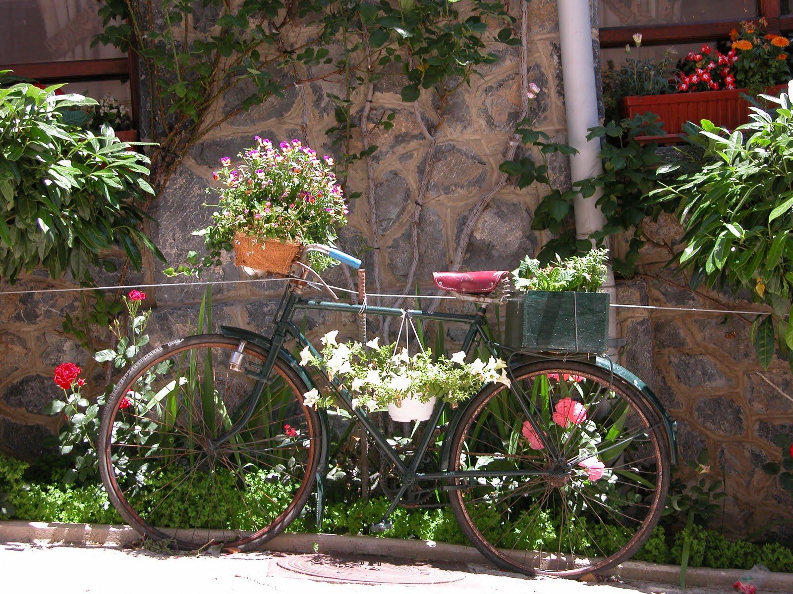 ideias para jardim simples:Ideias para um jardim