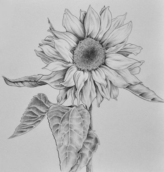 лепестков рисунок 9 цветка из