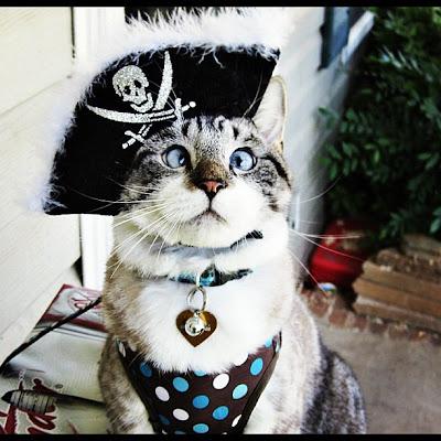 Spangles, kucing yang bermata juling