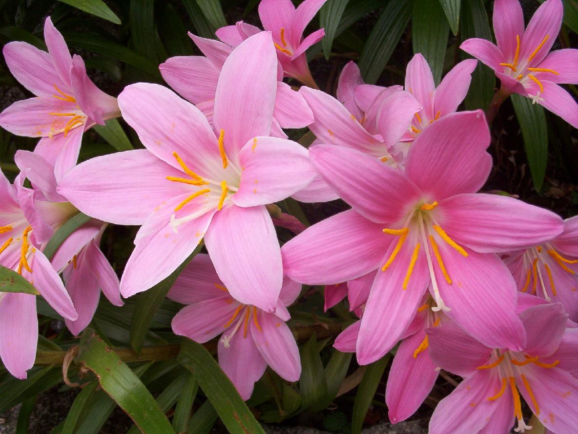 Decoraci n f cil flores de oto o - Fotos flores preciosas ...