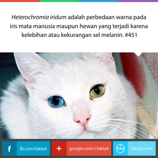 Heterochromia iridum: Mata Beda Warna