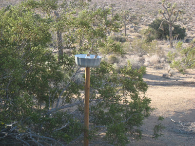 Bird Feeder at Rock Haven Cabin Joshua Tree National Park California