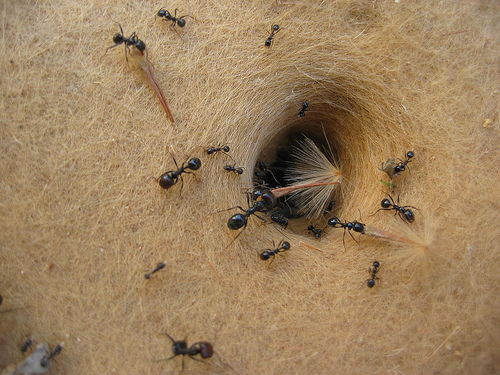 le peuple des fourmis. Black Bedroom Furniture Sets. Home Design Ideas
