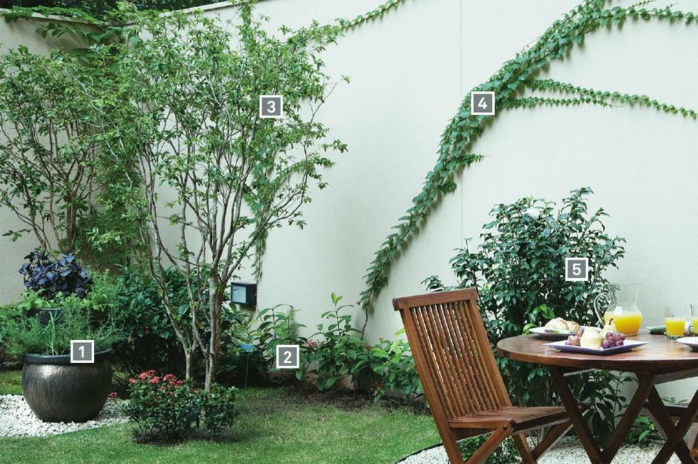 horta e jardim juntos:Com flores, horta em vasos, árvores frutíferas e muito espaço para