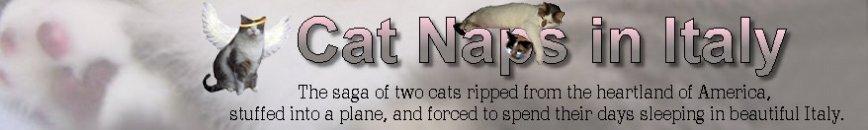 Cat Naps in Italy