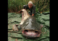 Well Catfish