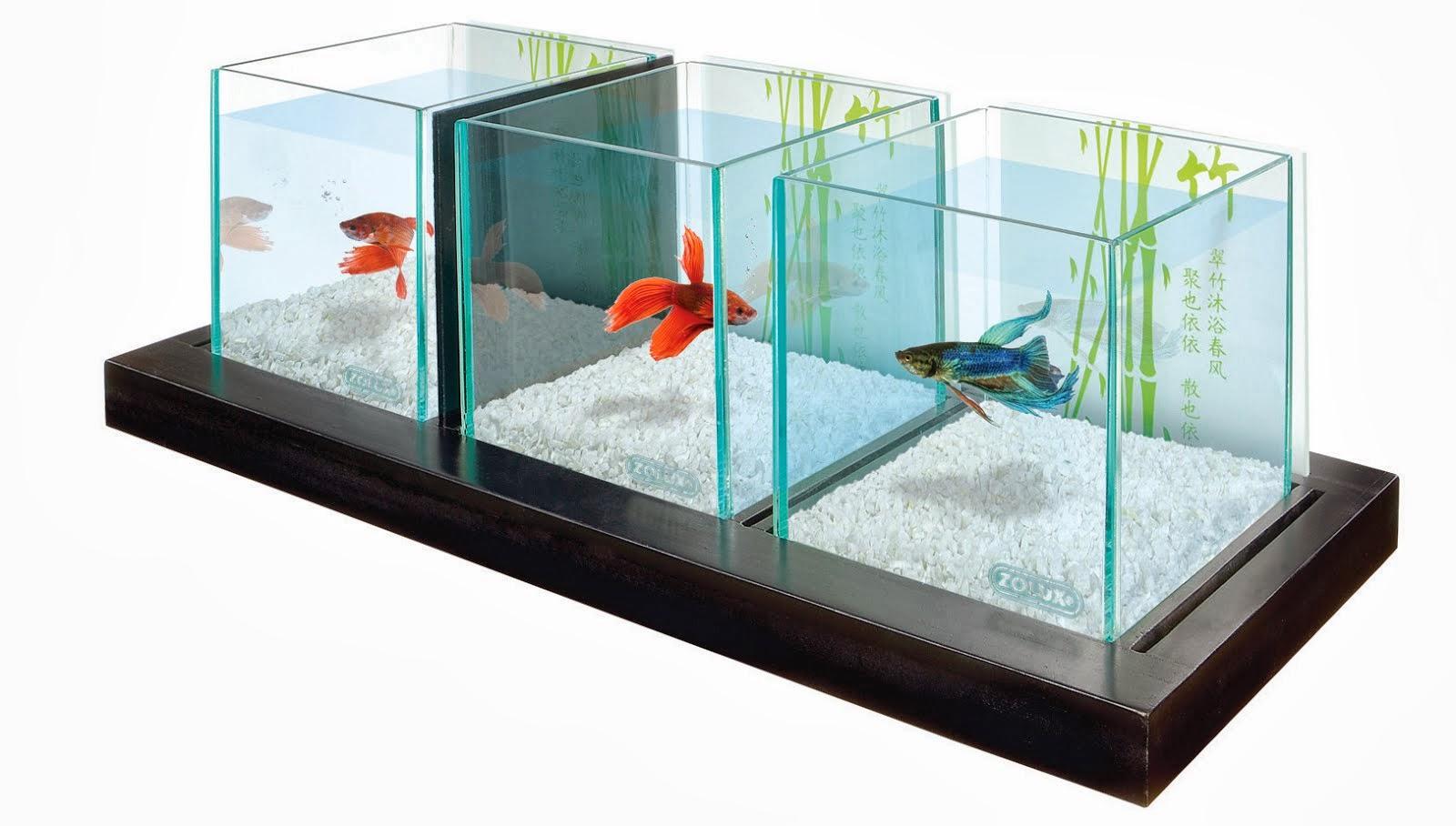 Какие условия для рыбок в домашних условиях 642