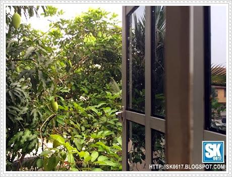 From My Window The Mango Tree Inspires