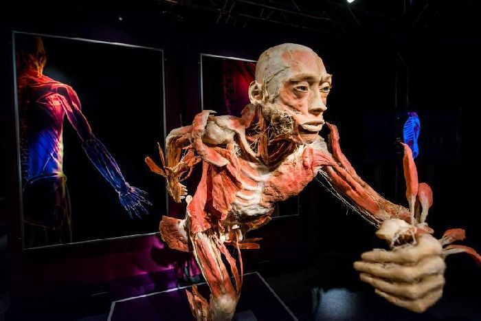 Nov 01, · you must be thinking of body worlds, which is the exhibit by the guy (gunther von hagens) who created the plastination technique. the cadavers used in