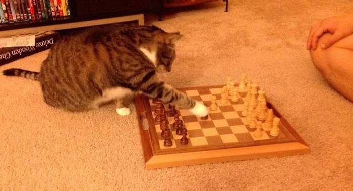 Funny cats - part 172, funny cat photos, best cat gallery, adorable cat pictures