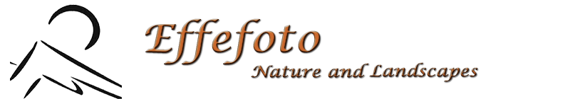 Effefoto Blog